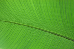 Green leaf plant close up. Abstract natural background Royalty Free Stock Photos
