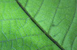 Green leaf from a plant close up shot. With bright light stock photo