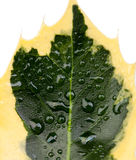 Green leaf of a plant closeup Stock Photo