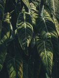 Green Leaf Plant during Daytime Royalty Free Stock Photo