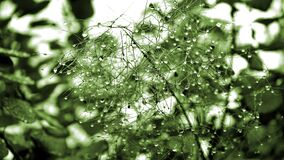 Green Leaf Plant With Dew Stock Images