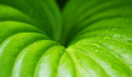 Green leaf plant with dew drops, background stock photos
