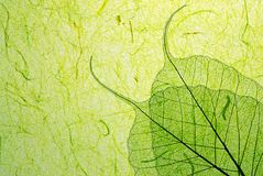 Green leaf with plant fibre. Green leaf on plant fibre background stock image