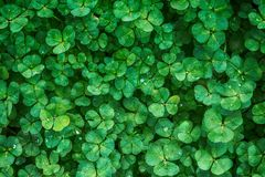 Green, Leaf, Plant, Grass Stock Images