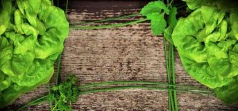 Green, Leaf, Plant, Leaf Vegetable Royalty Free Stock Images