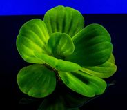 Green, Leaf, Plant, Macro Photography Stock Photography