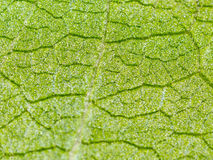 Green leaf on a plant in nature. Macro Royalty Free Stock Photography