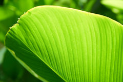 Green leaf plant. Selective focus Stock Photo