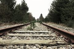 Green Leaf Plant Sprout on Brown Metal Train Track Royalty Free Stock Images