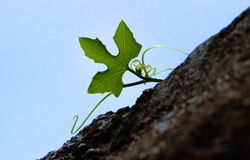 Green Leaf Plant Under Blue Sky at Daytime Stock Photography