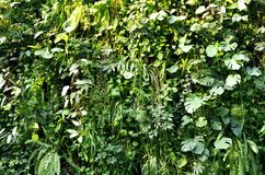 Free Green Leaf Plant Wall Stock Image - 135196131