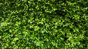 Green leaf plant wall stock photography