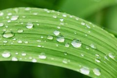 Green leaf of plant with water drops close up. Stock Photography
