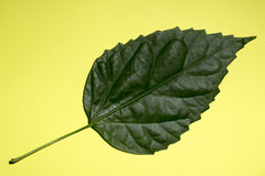 Green leaf of a plant on a yellow Stock Photos