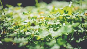 Green Leaf Plants Royalty Free Stock Photos