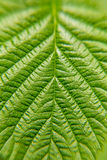 Green leaf plants close up. Macro. Textured background.  Stock Image
