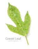 Green leaf polygonal geometric. Royalty Free Stock Image