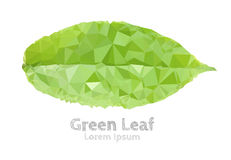Green leaf polygonal geometric. Stock Image