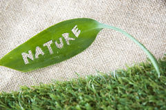 Green leaf put on grass Royalty Free Stock Photography