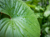 Green leaf. After the rain Royalty Free Stock Photos