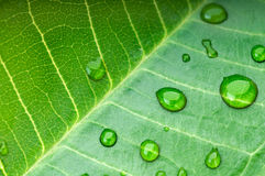 Green leaf with rain droplets stock photos