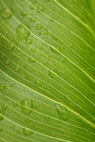 Green leaf with rain droplets Stock Image