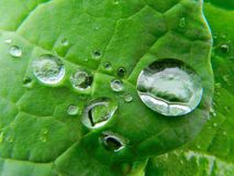 Green leaf with rain droplets on it Stock Photography