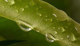 Green leaf with rain droplets on it Stock Photos
