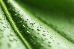 Green leaf with rain droplets royalty free stock photography