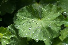 Green leaf and rain drops Stock Photos