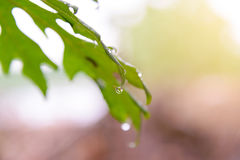 Green leaf with rain drops Royalty Free Stock Photos
