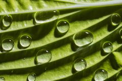 Green leaf with rain drops. Close up Royalty Free Stock Image
