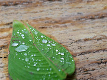 Green leaf with rain drops Stock Photos
