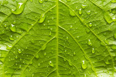 Green leaf with raindrops stock image