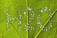 Green leaf raindrops water concept Royalty Free Stock Photography