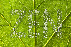 Green leaf raindrops Royalty Free Stock Photo