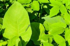 Green leaf rastreniye dragonfly light Stock Photo