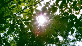 Green Leaf In A Rays Of Sun. The sun rays sparkle and shine through the green foliage of trees stock video