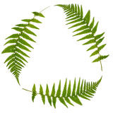 Green Leaf Recycling Symbol. Three green fern leaves forming a triangle symbolizing recycling over white Royalty Free Stock Images