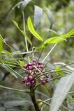 Green Leaf and red  fruits Royalty Free Stock Images