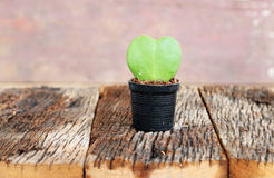 Green leaf and red heart shape in flower pot Stock Photo