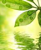 Green leaf reflected in water Royalty Free Stock Photography