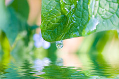Free Green Leaf Reflecting In The Water Royalty Free Stock Photography - 6742217