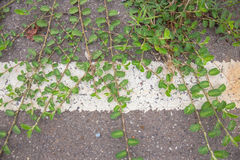 Green leaf  road Stock Photo