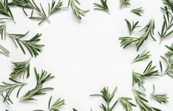 Green leaf rosemary on white background. flat lay, top view. Abstract Royalty Free Stock Image