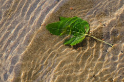 Green leaf on sand background Stock Photography