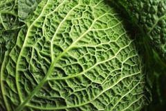Green leaf of savoy cabbage as background. Closeup royalty free stock photos