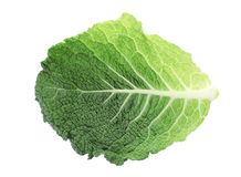 Green leaf of savoy cabbage on white background,. Top view royalty free stock images