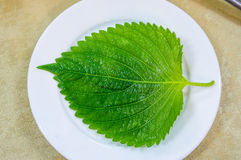 Green leaf. The sesame leaf looks great on a white dish Stock Photos