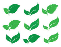 Green leaf. Set of green leaf icons  on white background. Leaves icon vector. illustration Stock Photo
